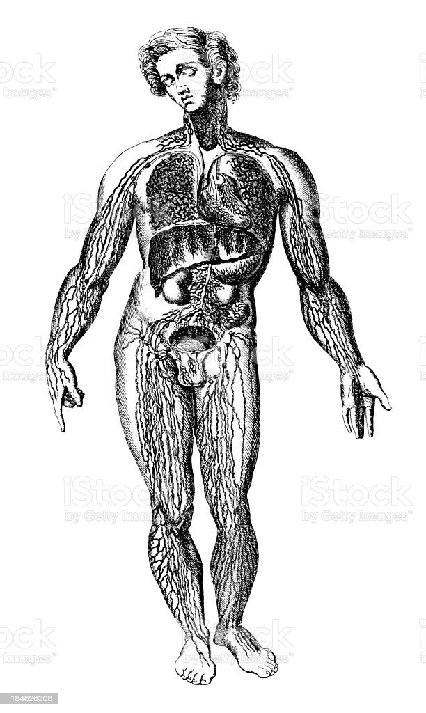 Medical Chart of the Human Body (Isolated on White) vector art illustration