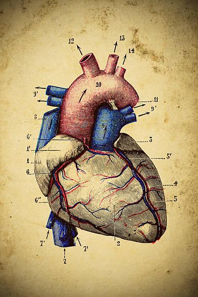 Medical scientific illustration on yellow paper: Heart vector art illustration