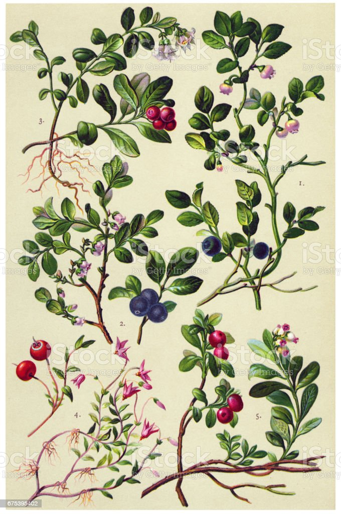 Medicinal and Herbal Plants vector art illustration