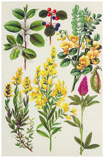 Medicinal and Herbal Plants