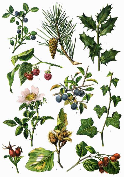 ハーブと薬用植物 - 薬草点のイラスト素材/クリップアート素材/マンガ素材/アイコン素材