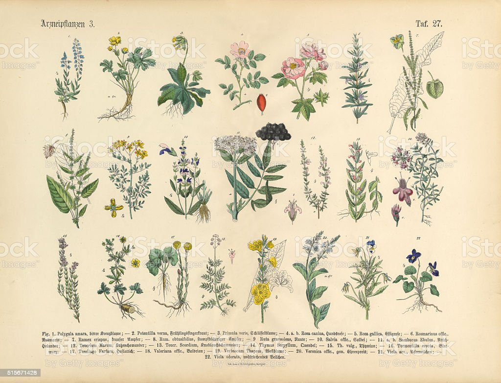Medicinal and Herbal Plants, Victorian Botanical Illustration vector art illustration