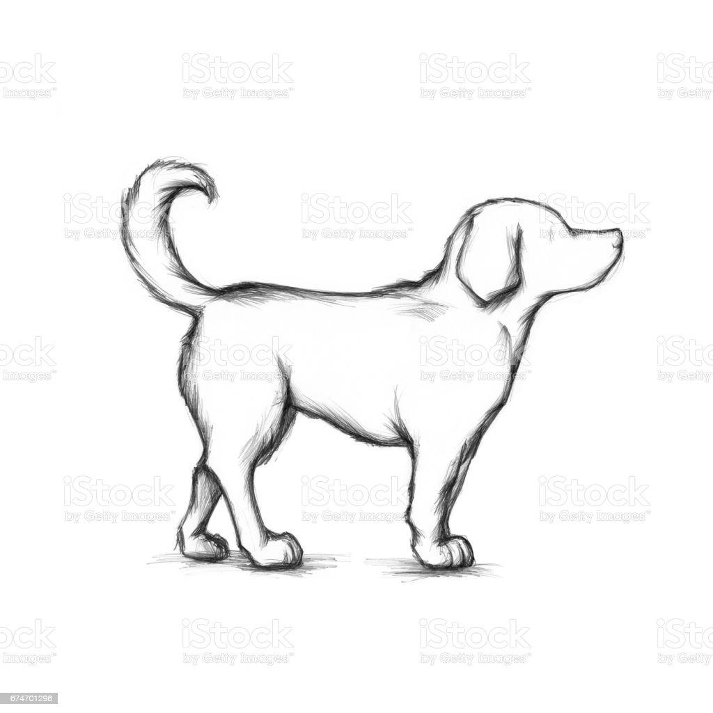 Medium sized dog – Vektorgrafik
