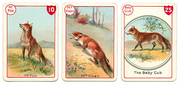 three fox playing cards victorian animal families game - whiteway fox stock illustrations, clip art, cartoons, & icons