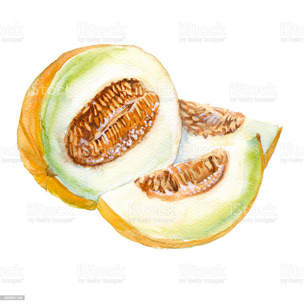 Melon. Isolated. Watercolor illustration. vector art illustration