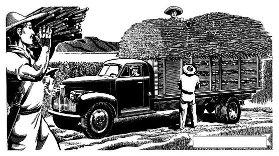 Men Loading Sugar Cane