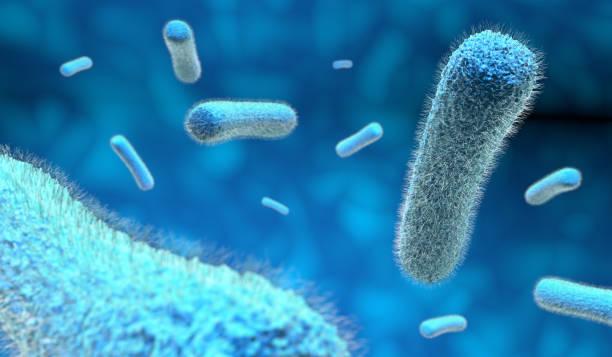microscopic bacteria in blue background microscopic bacteria in blue background, 3d illustration bacillus subtilis stock illustrations