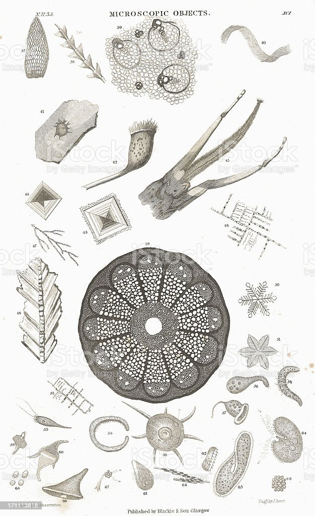Microscopic Objects old litho print from 1852 royalty-free stock vector art