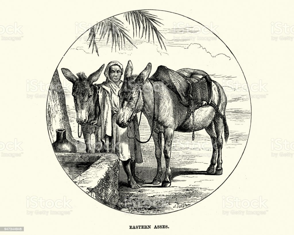 Middle Eastern boy with Asses, 19th Century vector art illustration