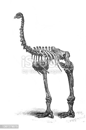 istock Moa skeleton in the old book Encyclopedia by I.E. Andrievsky, vol. 5, S. Petersburg, 1891 1267279075