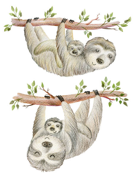 Mom and baby Set of two animals mums and babies. baby sloth stock illustrations