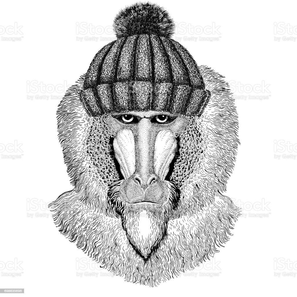 Mono, Babuino, perro mono, mono uso invierno sombrero hecho punto - ilustración de arte vectorial