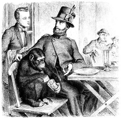 Monkey in a restaurant