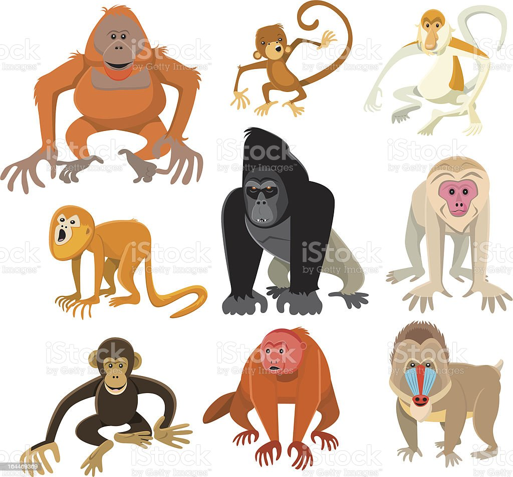Mono o Primate Collection - ilustración de arte vectorial