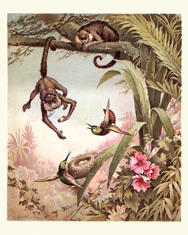 Vintage engraving of a Monkey stealing birds eggs from a nest, 19th Century.
