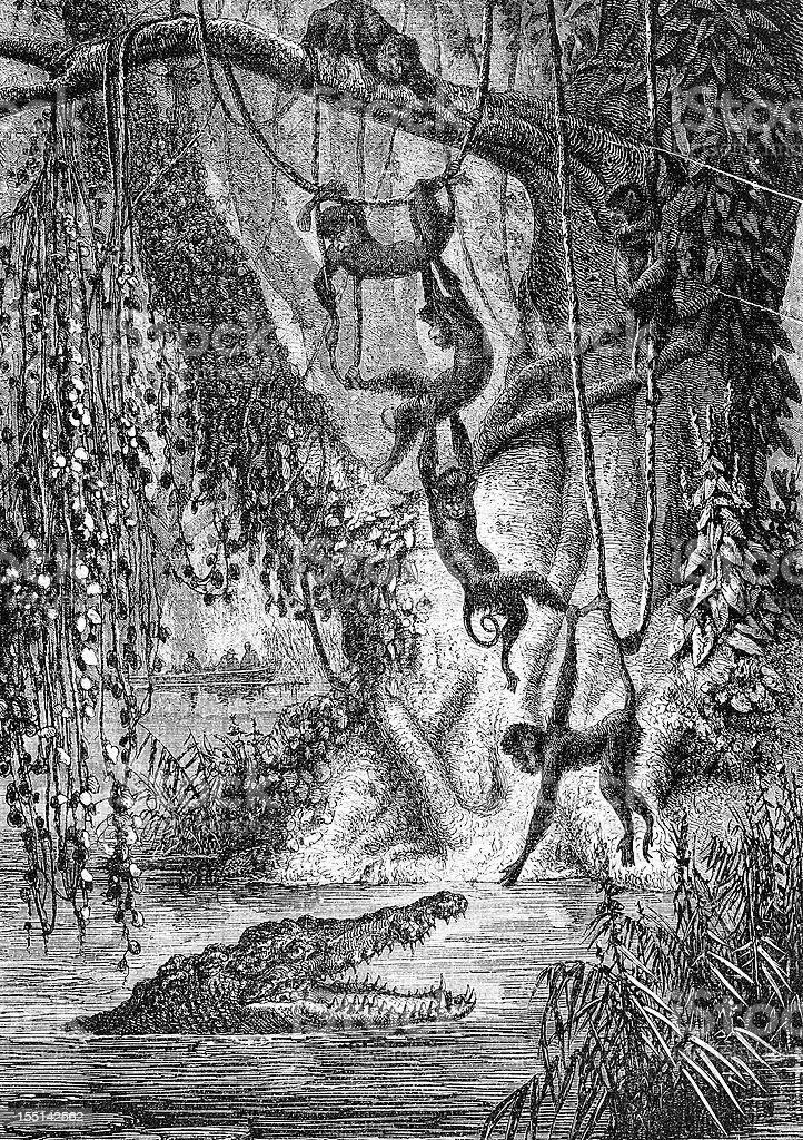 Monkeys and crocodile in the jungle vector art illustration