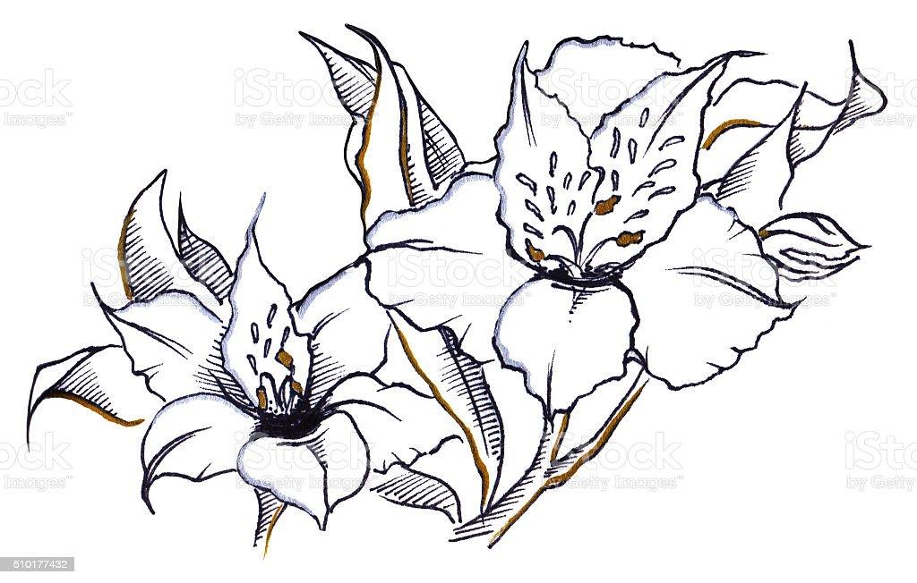 Monocromo par flor Alstroemeria composición de trazado - ilustración de arte vectorial
