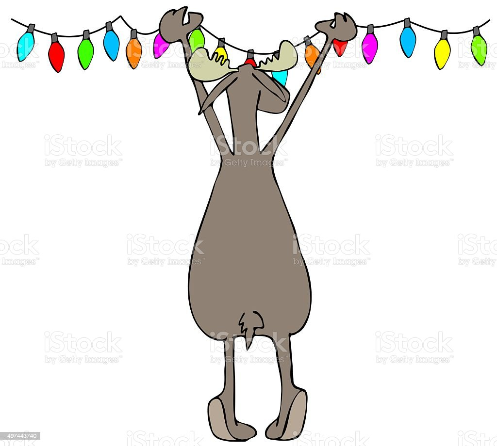 moose hanging christmas lights royalty free moose hanging christmas lights stock vector art
