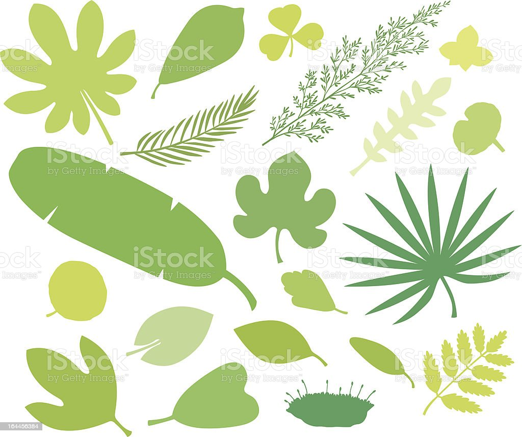 more green leafs VII royalty-free more green leafs vii stock vector art & more images of agriculture