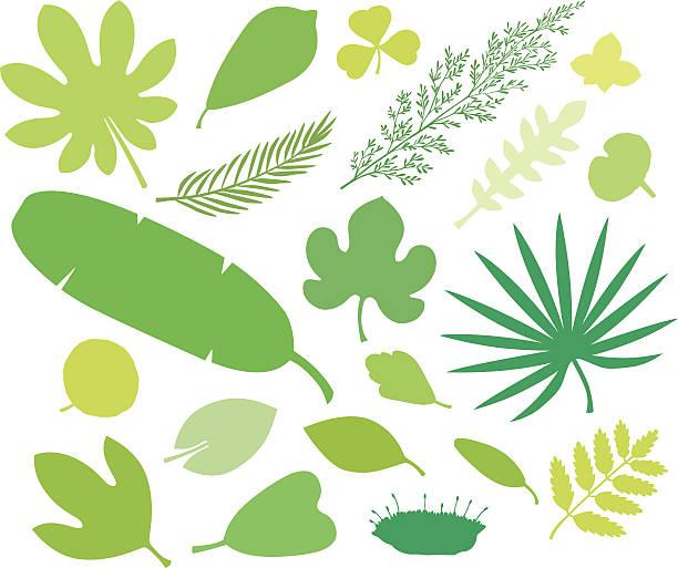 more green leafs VII more green leafs VII moss stock illustrations