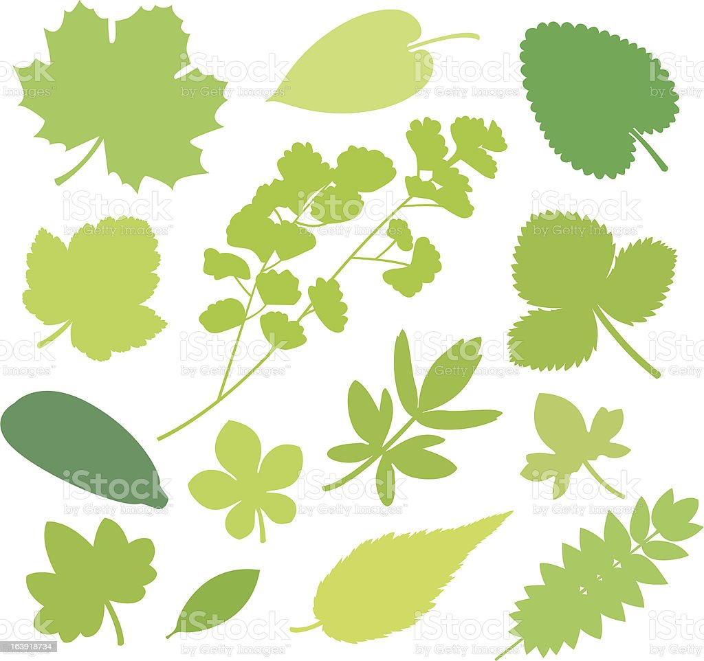 more green Leafs XI royalty-free stock vector art
