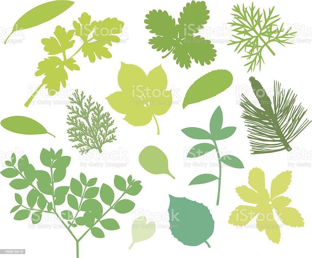 Più verde leafs XII. - illustrazione arte vettoriale