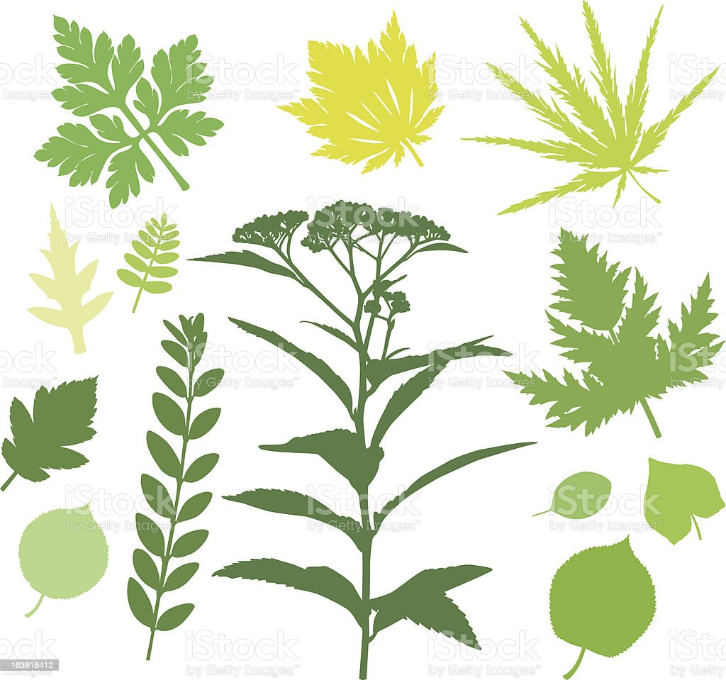 more green Leafs (and Plants) XVI royalty-free stock vector art