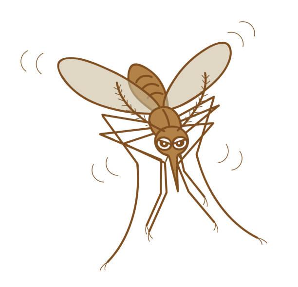 蚊 ベクターアートイラスト