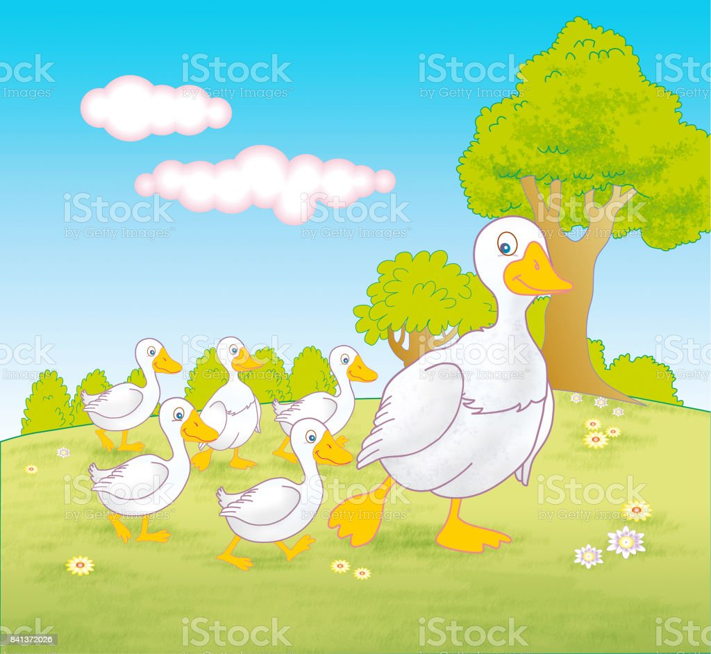 Mother goose and baby geese walking through field - jpg illustration vector art illustration
