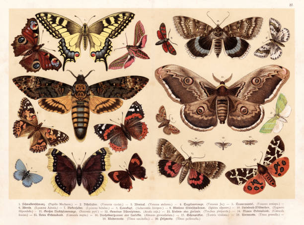 stockillustraties, clipart, cartoons en iconen met moths and butterflies chromolithography 1888 - mot