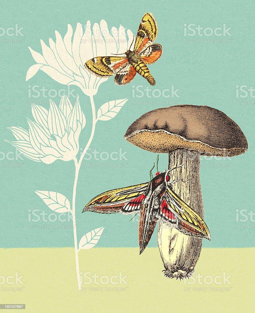 Moths, Mushroom and Flowers royalty-free stock vector art