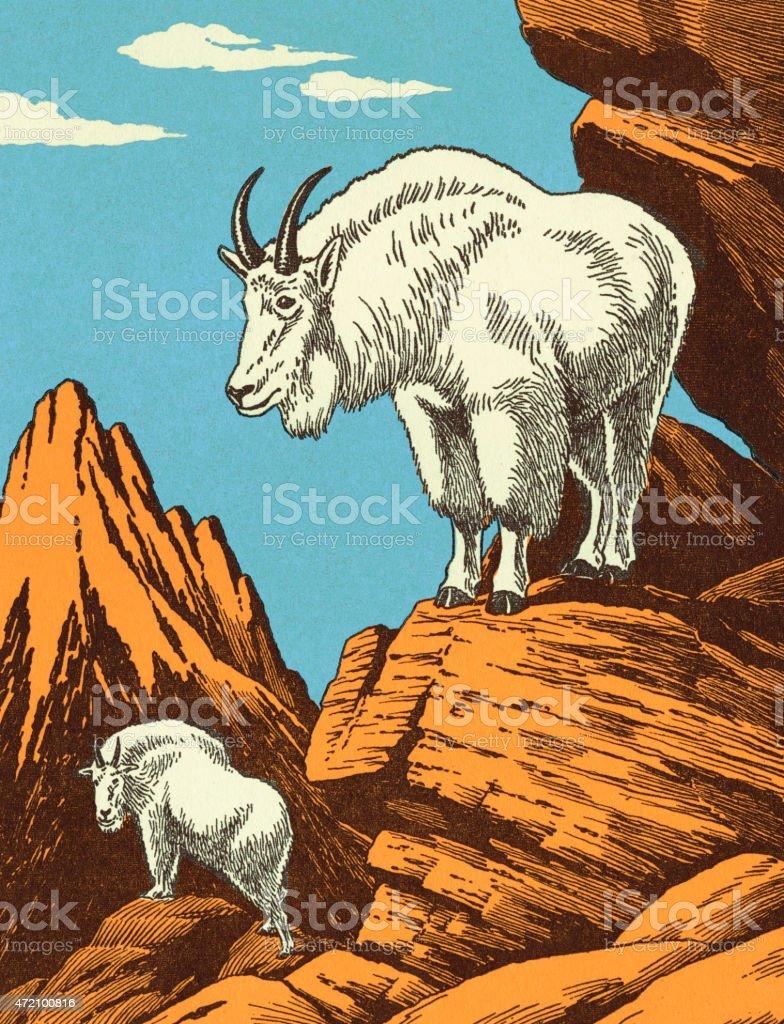 Mountain Goats vector art illustration