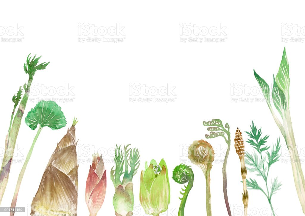 Mountain herbs vector art illustration