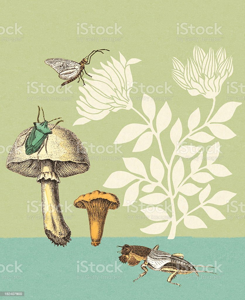 Mushrooms, Insects and Flowers royalty-free stock vector art