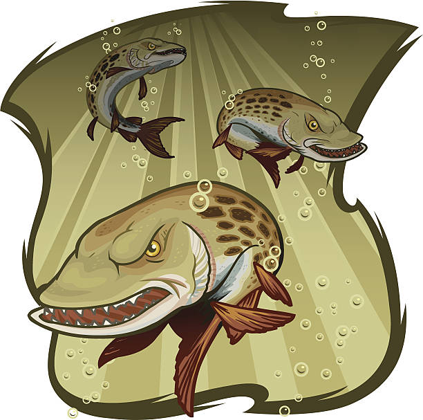 Muskies  pike fish stock illustrations