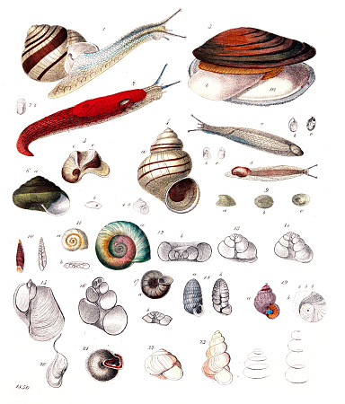 Mussels and snails