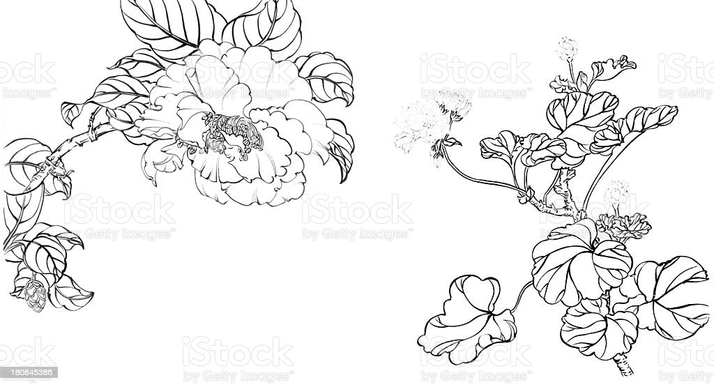 Chinese painting,flower--line drawing,peony