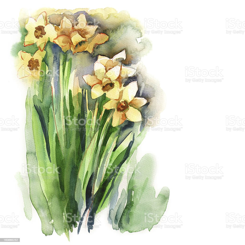 Narcissus royalty-free narcissus stock vector art & more images of abstract