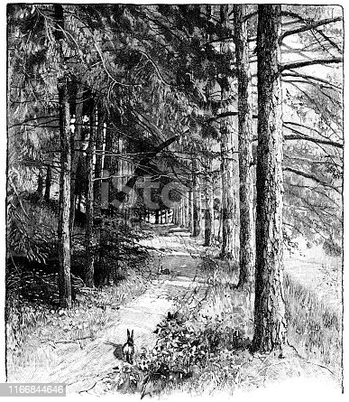 Nathaniel Hawthorne's Larch Path at The Wayside in Concord, Massachusetts, USA. Vintage etching circa late 19th century.
