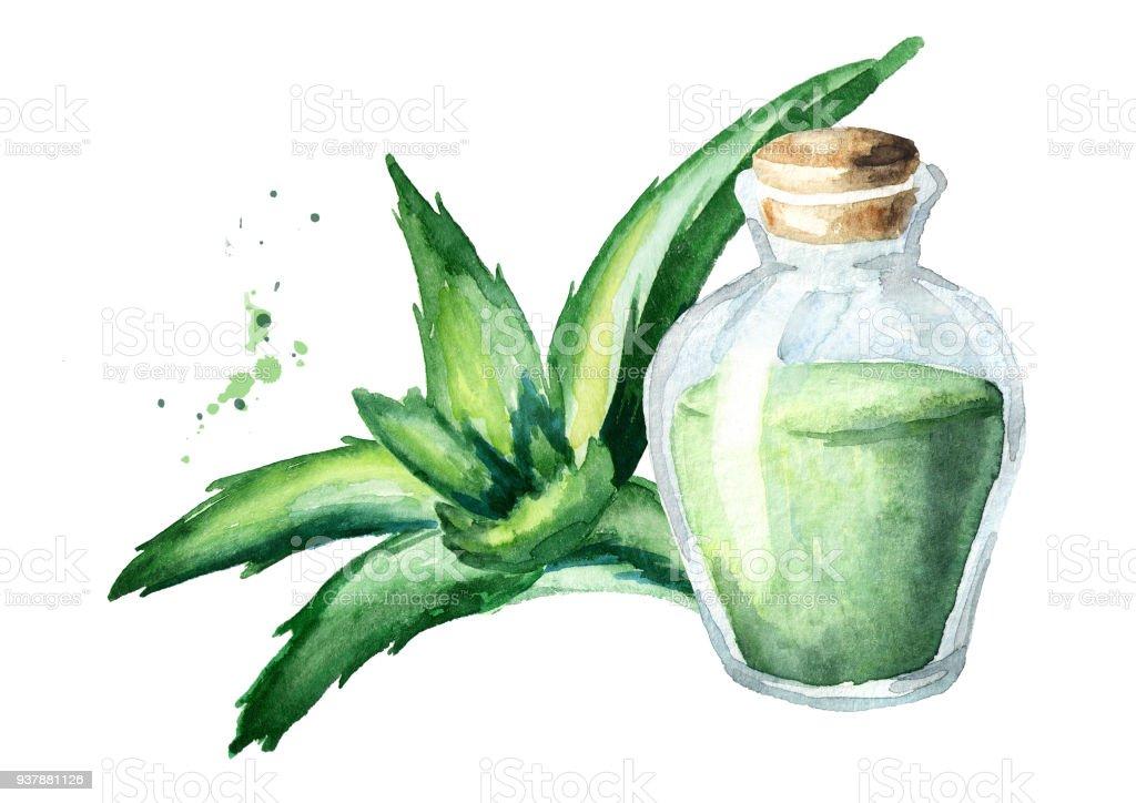 Huile essentielle de l'aloe vera naturel. Illustration aquarelle dessinés à la main - Illustration vectorielle