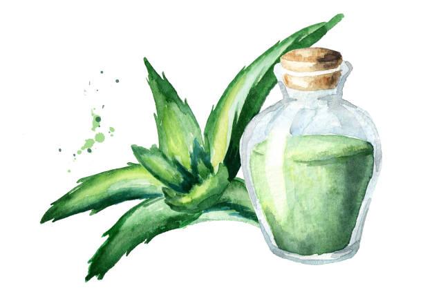 Natural aloe vera essential oil. Watercolor hand drawn illustration vector art illustration