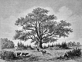 Nature scene with a huge oak - 1888