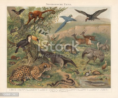 istock Neotropical realm (wildlife of Central and South America), published 1897 1058812822