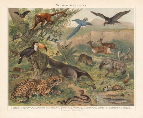 Neotropical realm (wildlife of Central and South America), published 1897