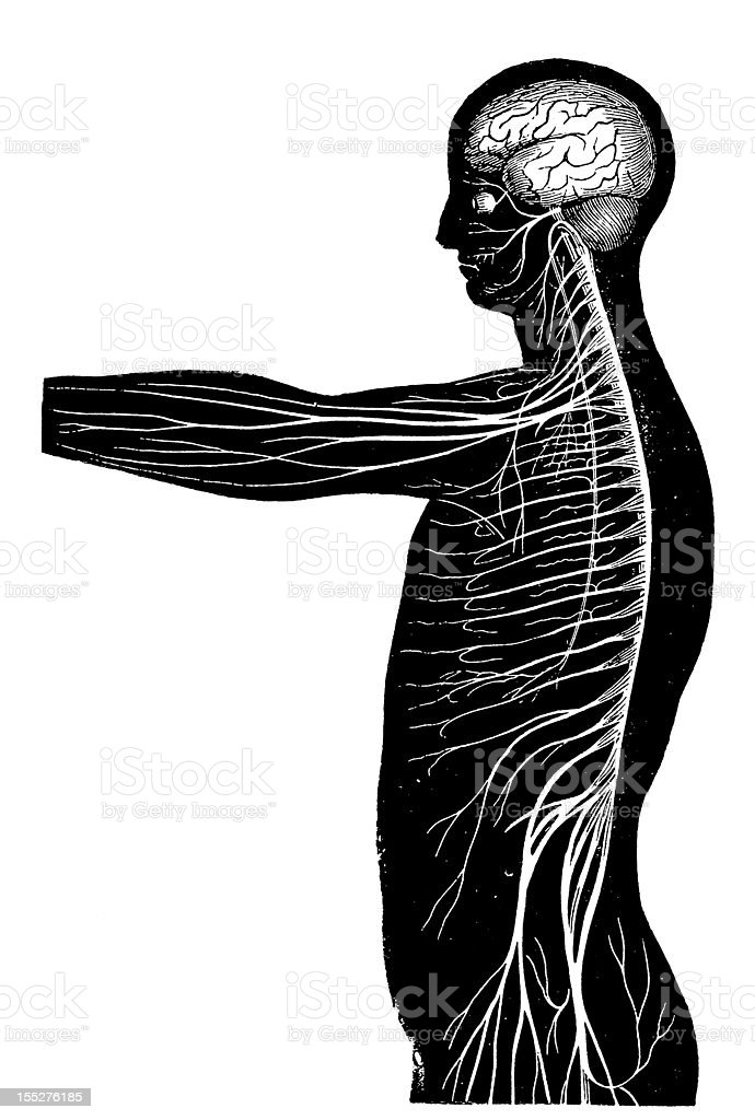 Nervous system royalty-free nervous system stock vector art & more images of 19th century style