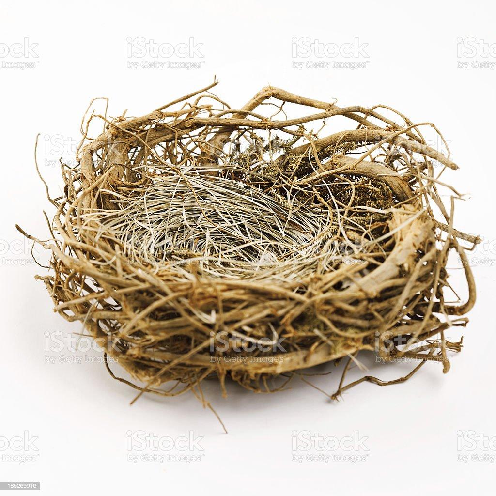 Nest vector art illustration