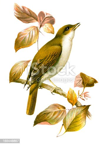 istock Nightingale Chromolithograph 155446857