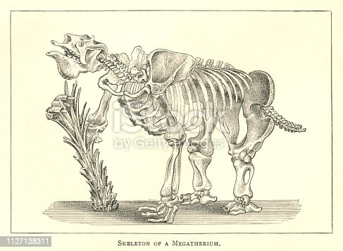 """A 19th century engraving of the skeleton of a Megatherium (meaning """"Great Beast"""") - a type of elephant-sized ground sloth living in southern America between the early Pliocene and late Pleistocene periods. From """"The World's Foundations or Geology for Beginners"""" by Agnes Giberne. Published in 1899 by Seeley, Jackson & Halliday, London."""