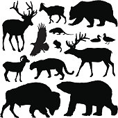 Highly-detailed North American animal silhouettes.