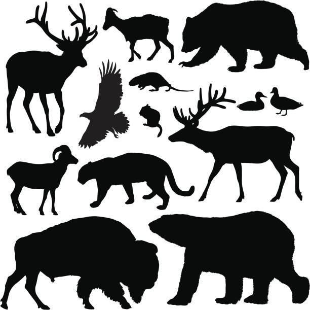 North American Animals Highly-detailed North American animal silhouettes. american bison stock illustrations